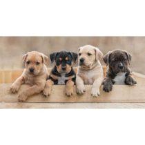 Tiger, Tigris fürdőlepedő, strand törölköző 70*140cm
